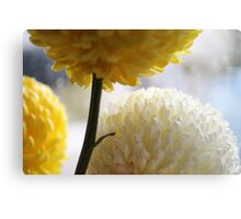 Macro Photography - Flowers Canvas Print