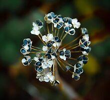 Garlic Chives by Wib Dawson