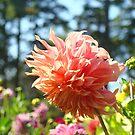 Summer Floral Orange Dahlias Garden Prints by BasleeArtPrints