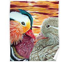 Mandarin Ducks in Love Poster