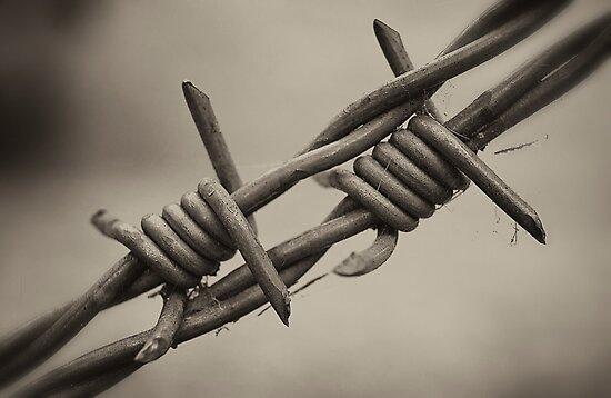 Barbed by Paul Earl