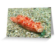 Nudibranch! Greeting Card