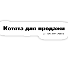 KITTENS FOR SALE!!! Sticker