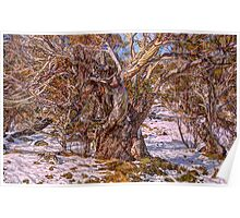 Snow Gum Abstract - Perisher Valley NSW - The HDR Experience Poster