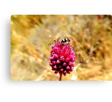 insect with flower Canvas Print