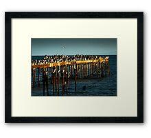Cormorants on Pier Framed Print
