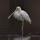 Yellow Billed Spoonbill  by Kym Bradley