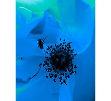insect in blue flower Photographic Print