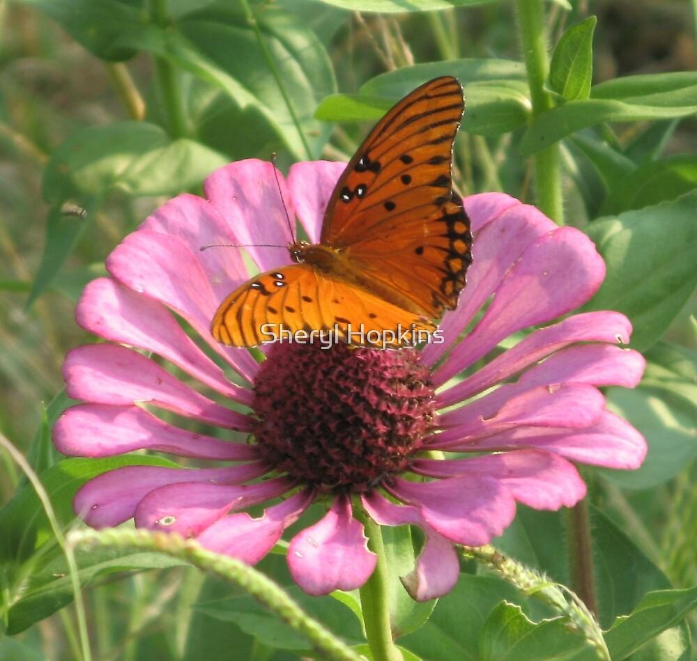 Butterfly on Pink Flower by Sheryl Hopkins