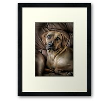 A PROUD PORTRAIT 2 Framed Print