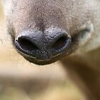 Tapir's Nose by GreyFeatherPhot