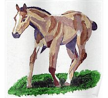 Buckskin Quarter Horse Foal Poster