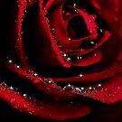 ROSE~ by RoseMarie747