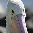 Pelican at Port Macquarie by Kymbo