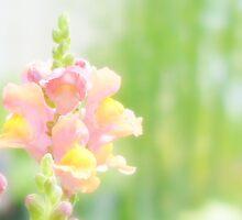 Summer Sweet... by LindaR