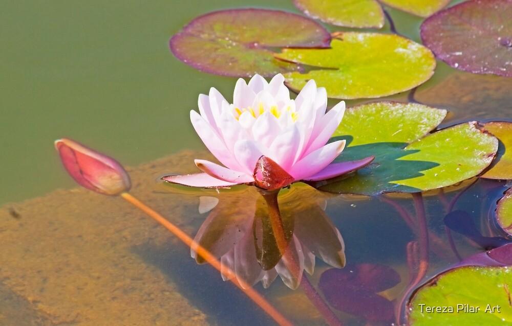 lotus I by terezadelpilar ~ art & architecture