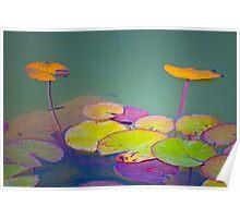 lotus floating leaves Poster
