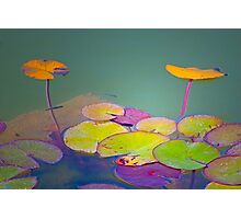 lotus floating leaves Photographic Print