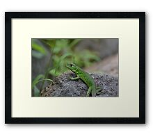 Here's A Green Lizard Framed Print
