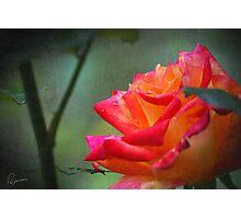 Rose Vintage Photographic Print
