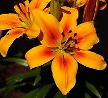 BIRTHDAY FLOWERS........ by RoseMarie747