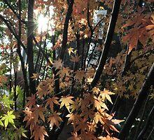 Japanese Maple Leaf by krootesmurdy