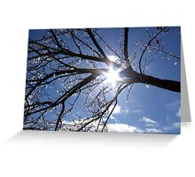 Icicles on Pistachio Tree Greeting Card