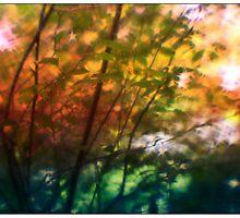 Day 28 ~ Outside my window by leapdaybride