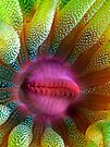 Cup Coral Portrait by Henry Jager