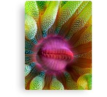 Cup Coral Portrait Canvas Print