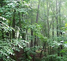 Green Sanctuary by Kathilee