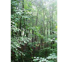 Green Sanctuary Photographic Print