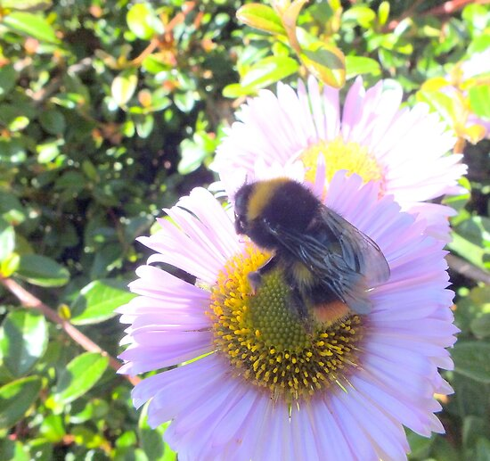 Bee busy at work. by Livvy Young