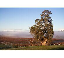 ~ Winter Vineyard ~ Photographic Print