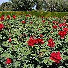 Magical Rose Garden by Segalili