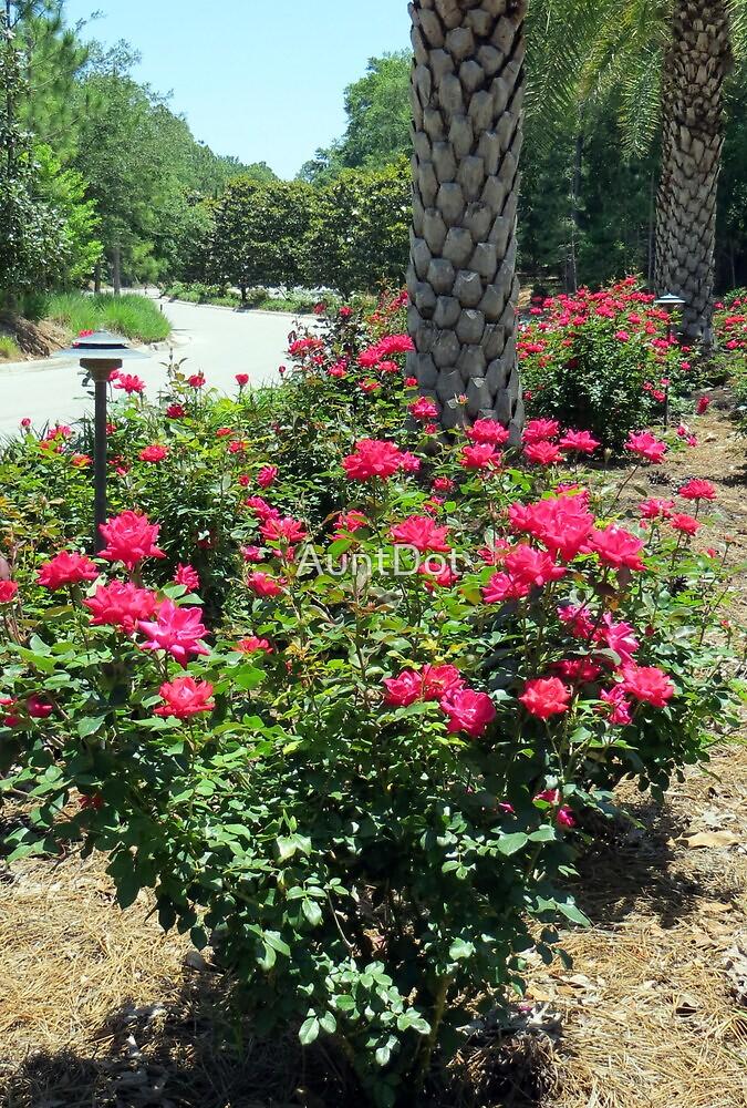 Rose Garden by AuntDot