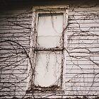 Window. by Lindsay Osborne
