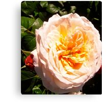Governor General's Roses  7 Canvas Print