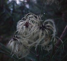 Natures Spider by Charlie Hughes