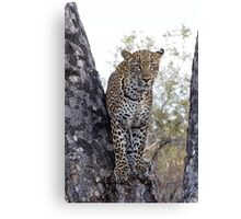 Looking For My Daughter Canvas Print