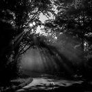 misty rays by Alexandr Grichenko