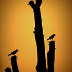 Saguaro Snack at Sunset Silhoutte by Kimberly Chadwick