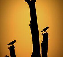 Saguaro Snack at Sunset Silhoutte by Kimberly Chadwick
