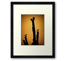 Saguaro Snack at Sunset Silhoutte Framed Print