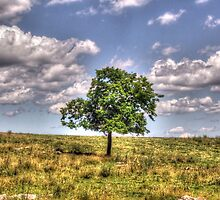 A Lonely Tree by James Brotherton
