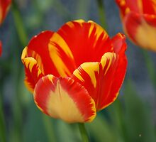 Yellow/Red Sunshine by vbk70