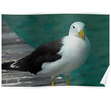 Pacific Gull #2 Poster