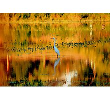 Abstract Egret Photographic Print