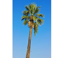 Palm Tree Over Clear Blue Sky Photographic Print