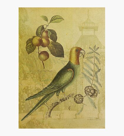 Parrot with Plums Photographic Print